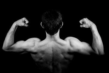men's muscle