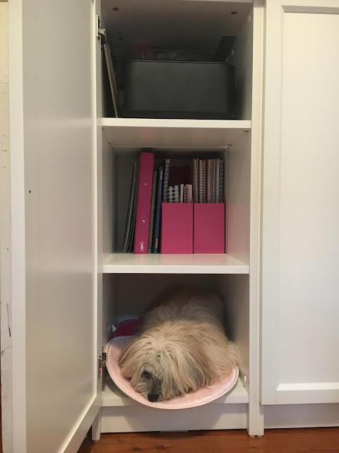 Trixie finds a new sleeping spot