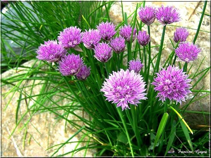Plantas de cuidado f cil - Alegria planta cuidados ...