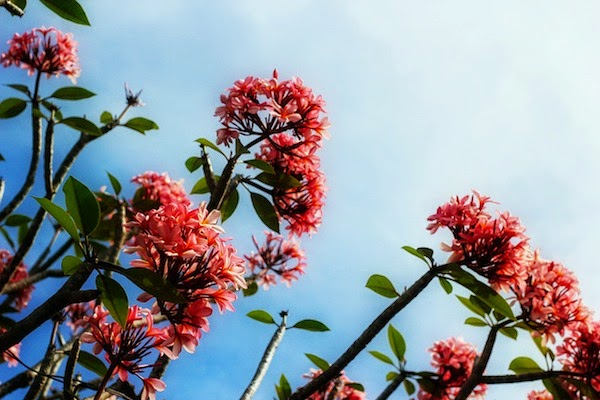 Morgan's Milieu | Time for a Switch-aroo: Pink flowers growing up towards the sky.