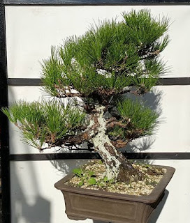 bonsai center sopelana