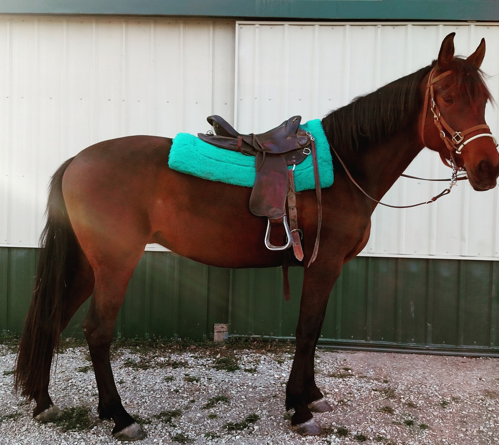 Confessions of a Dressage Barbie: Can We Hack It?