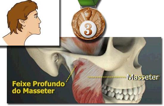 Quais são os músculos mais fortes do corpo humano - E qual é o mais fraco - 3 lugar Masseter mandíbula