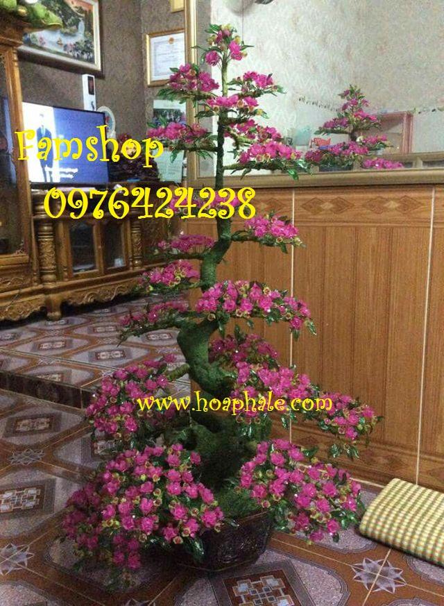 Goc bonsai cay hoa dao tai To Hieu