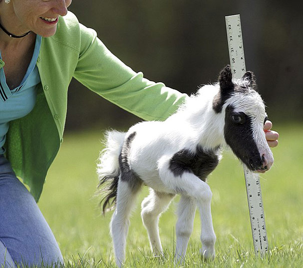 Baby Animals: Foal