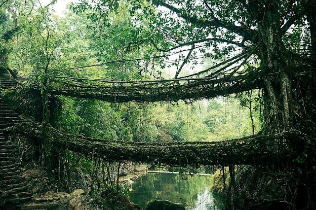 Bridge Radici India