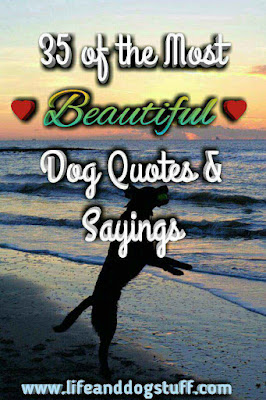 35 of the Most Beautiful Dog Quotes and Sayings.