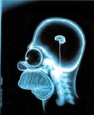 Cerebro do Fernando Nascimento
