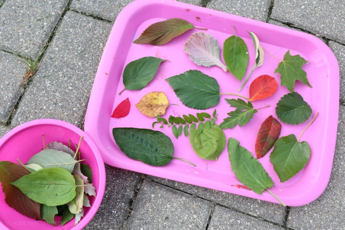 preschool leaf identification
