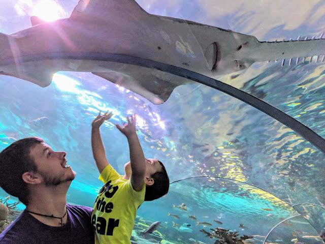 Gatlinburg, vacation, travel, family fun, to do with kids, Gatlinburg attraction, Ripley's Aquarium, Ripley's Aquarium Gatlinburg, Gatlinburg TN, Tennessee, fish, aquarium, tourist attraction, Gatlinburg with kids, shark tunnel, shark