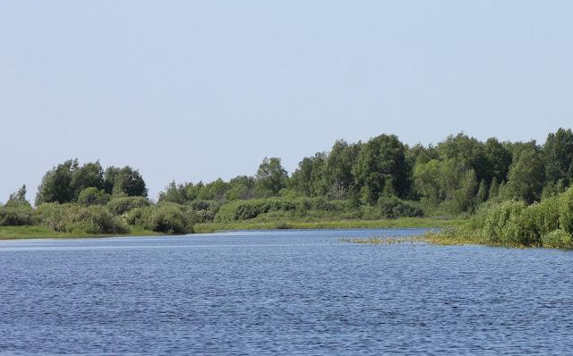 На реке летом