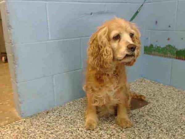 Llora abandonada en la perrera, sus dueños se llevaron a otro perro más joven