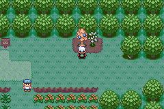 Pokemon Xy Gba Cheats
