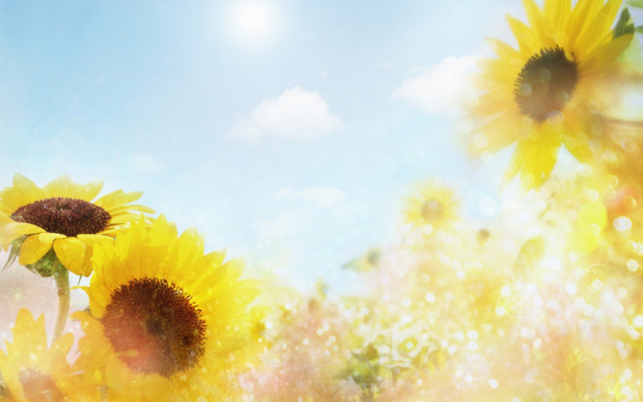Flowers For Flower Lovers.: Flowers Background Desktop