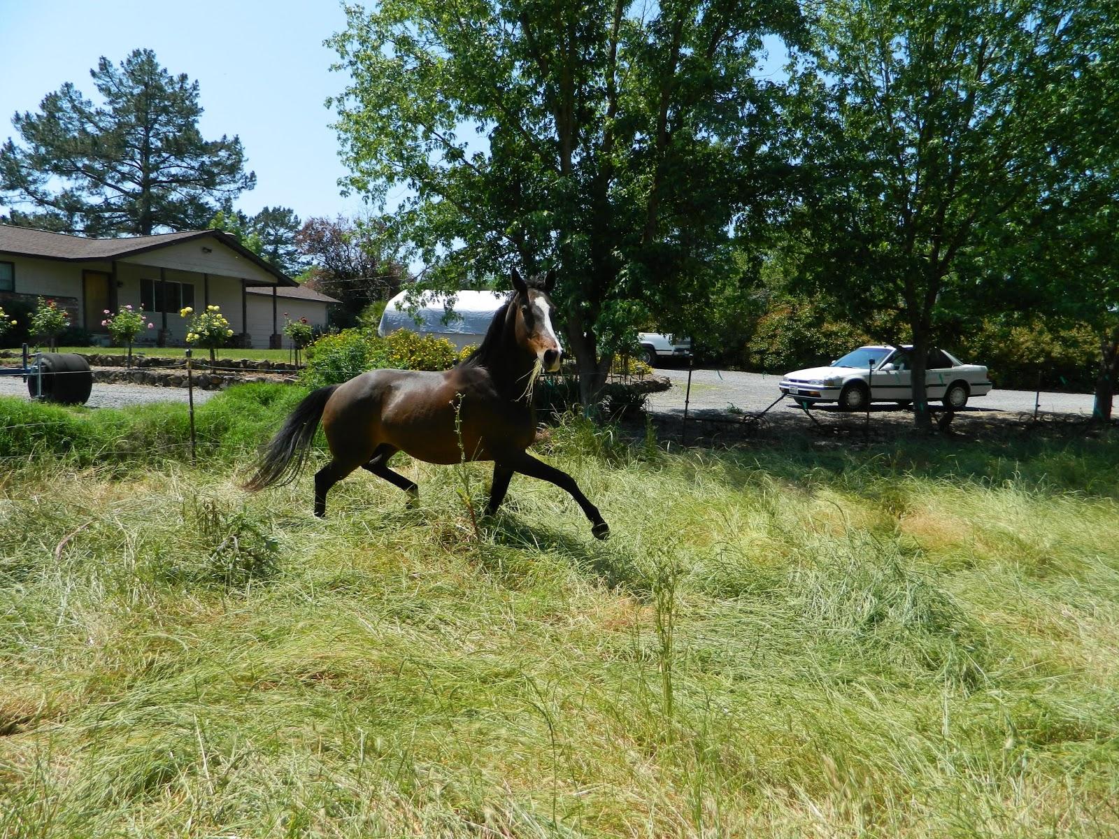 Alissa Mayer - Certified Equine Hanna Somatics® Educator ...