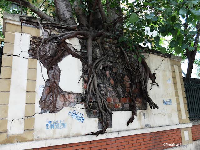 hanoi mur arbre vietnam