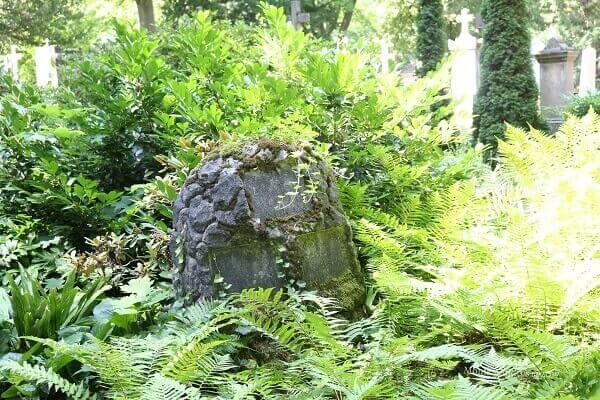 zugewuchertes Grab auf dem alten Friedhof Bonn / eigene kleine Welt