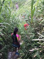 ジャングルの中を走るメンバー