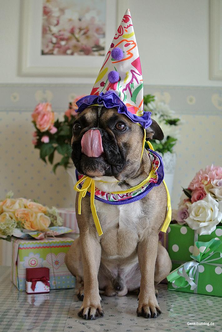 Geburtstagsgrüße Französische Bulldogge