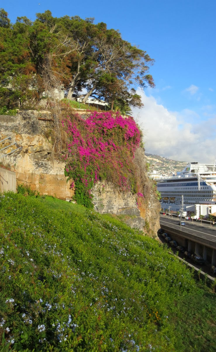 nature in Funchal downtown