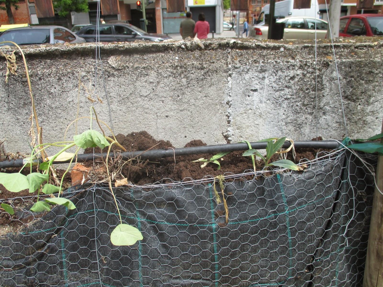 En torno al huerto huerto urbano - Plantas de huerto ...