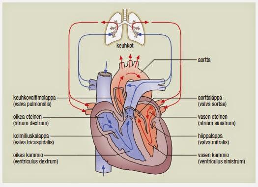 Keuhkovaltimorunko