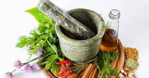 Tanaman Apotik Hidup Tumbuhan yang Bermanfaat Bagi Kesehatan Tubuh