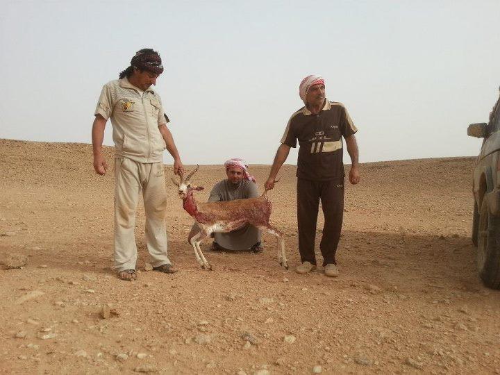 صيد غزال العراق - الرطبة