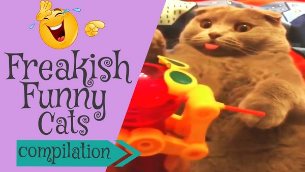 funny compilation videos for cats Funpetvid