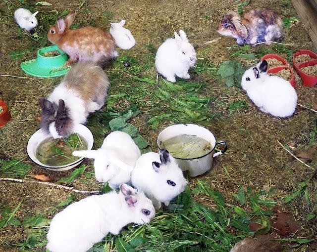 Самарский детский эколого-биологический центр: кролики... много... разные и смешные...
