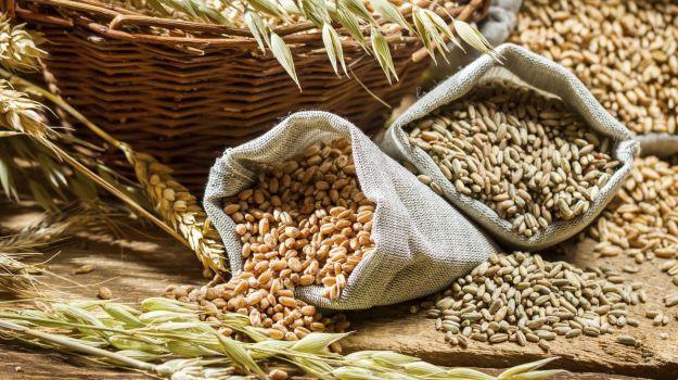 rich fiber foods