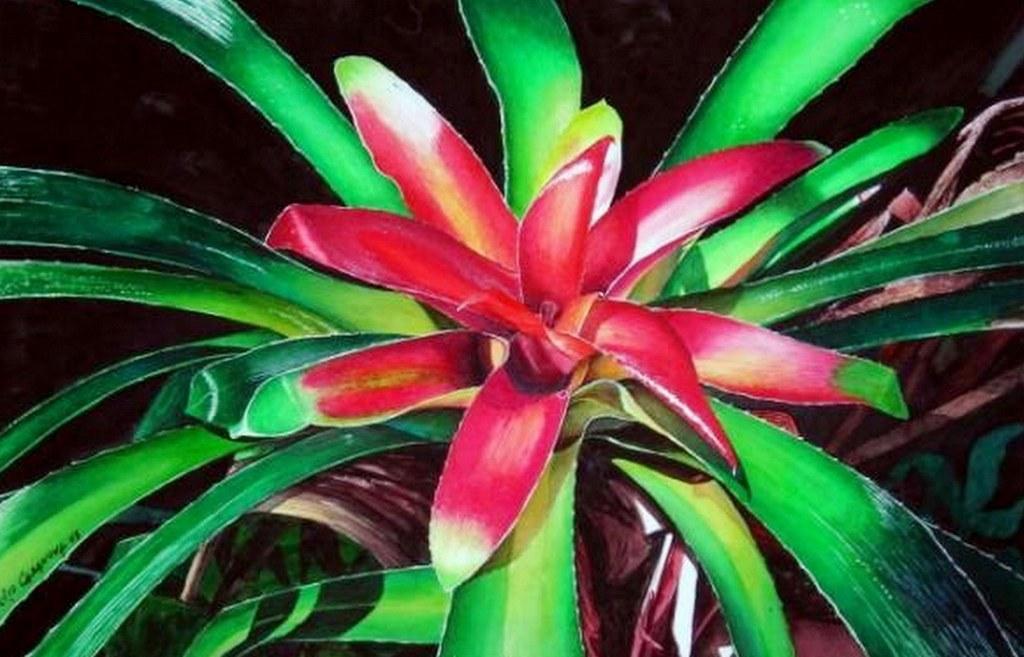 Download image bodegones de flores al leo julio casanova cuadros pc