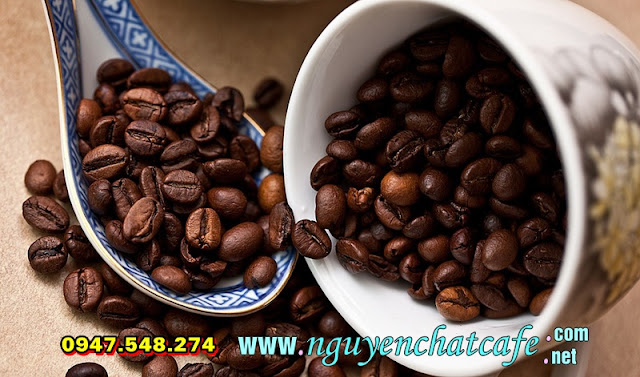 Tìm hiểu về cà phê Robusta hay còn gọi là cà phê vối