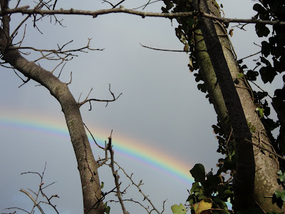 Rainbow In March