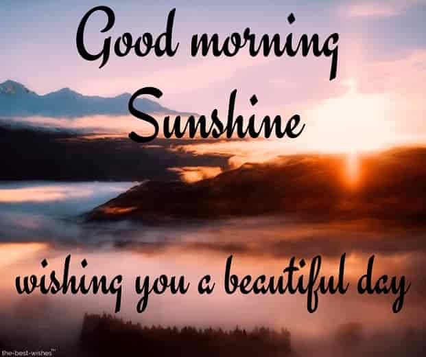 good morning sunshine wishing you a beautiful day