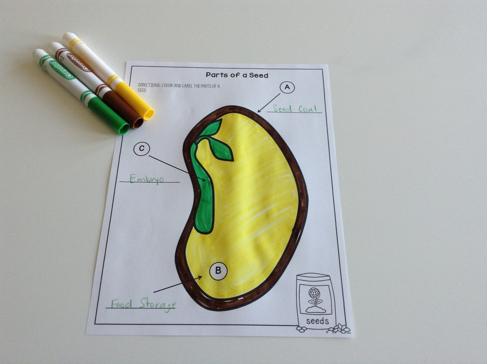 TeacherMomPlus3 Parts of a Seed Felt Puzzle Free Printable – Parts of a Seed Worksheet