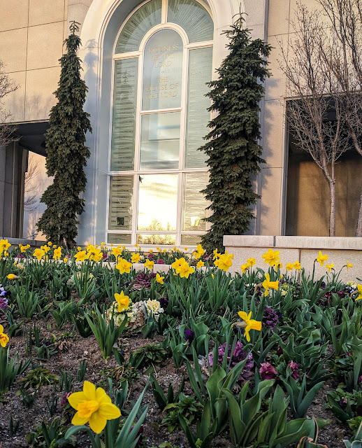 Spring Bulb Flowers outside the front of the Timpanogas Temple