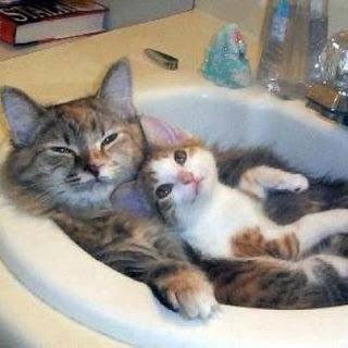 gata mãe e filhote