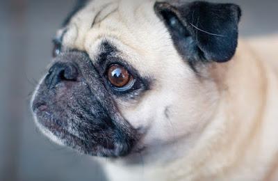 การเกาเนื้อเกาตัวของสุนัข อาจหมายถึงโรคซึมเศร้าของสุนัข