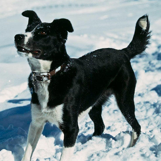 Dog Park Dangers: 5 Considerations Before Visiting a Dog Park