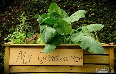 Introduction to Vegetable Gardening