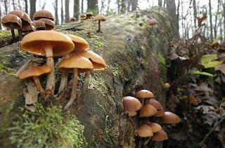 Macam-macam Komponen Biotik dalam Ekosistem