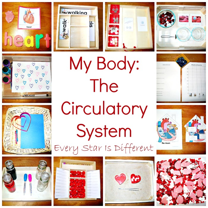 The Body: The Circulatory System