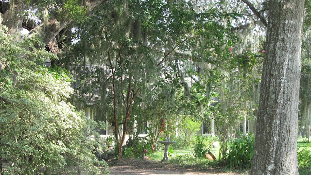 wooded yard