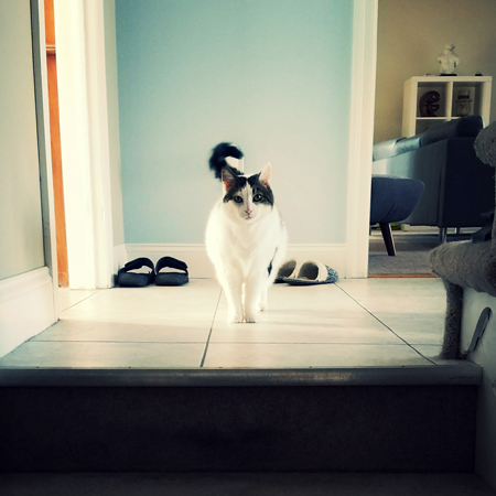 image of Olivia the White Farm Cat standing at the top of the stairs looking at me, her tail a blur of motion