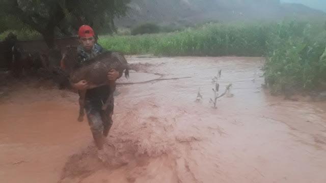 Miguel rettet eine Ziege aus dem Wasser https://youtu.be/lUnjCxCH3tc<<<<<<<