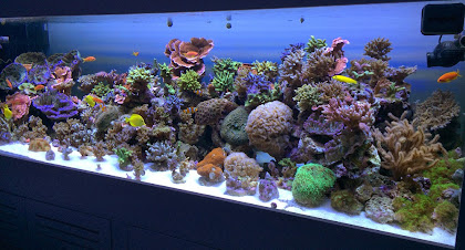 Reef Tank LED, PUR vs PAR in Aquarium Lighting