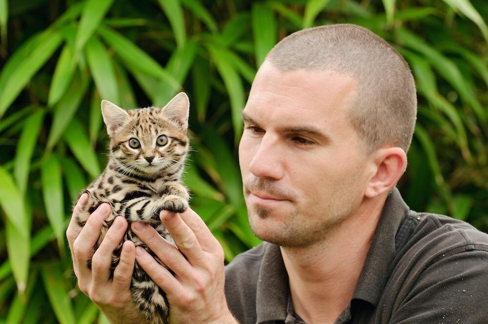 Rusty spotted cat, ras kucing terkecil di Asia yang menggemaskan