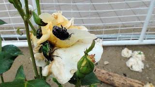 Αυτοσχέδιες παγίδες για έντομα