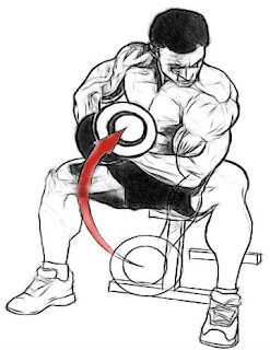 concentration curls,concentration curls for biceps,how to build muscular biceps,bodybuilding